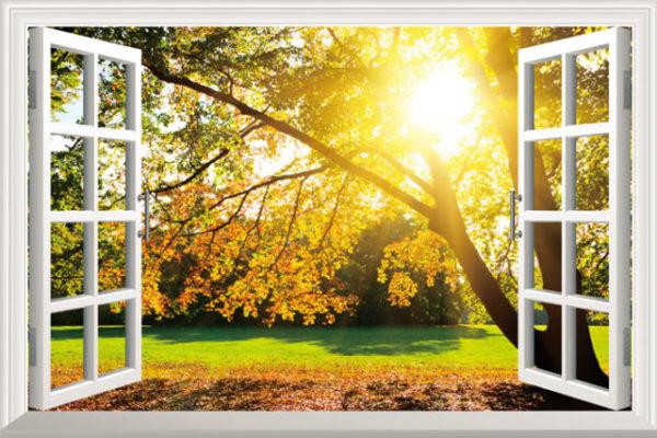 день за окном