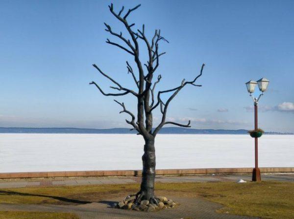 сухое дерево на берегу