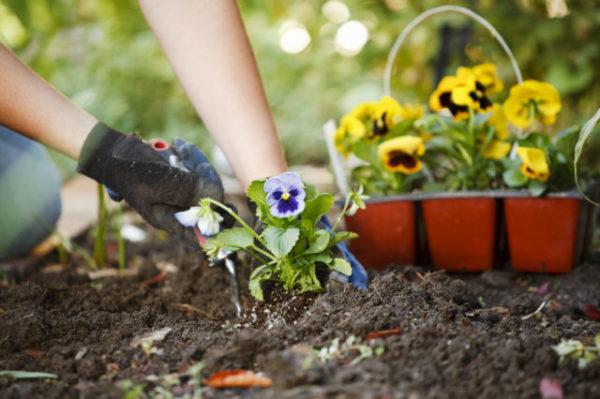 Нельзя сажать цветы дома 594