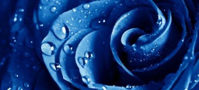 К чему снятся цветы по мнению знаменитых сновидцев