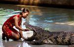 Толкование с помощью сонника: крокодил во сне