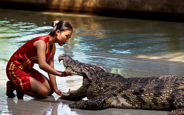 Сонник: К чему снится крокодил, толкование сновидения