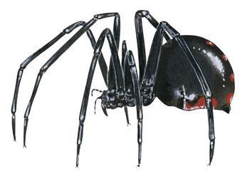 приснился паук значение