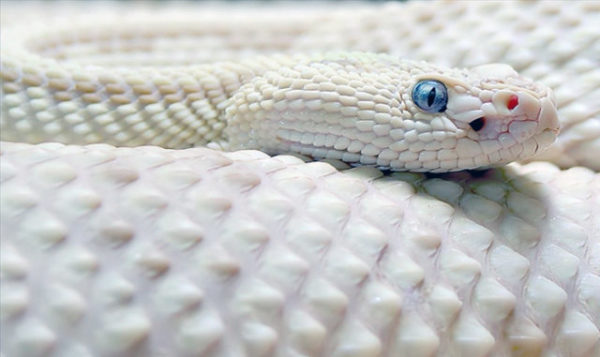 толкование снов змея