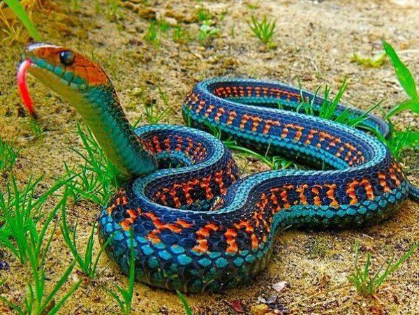 укус змеи сонник
