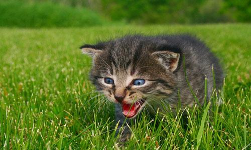 трактование снов с котятами