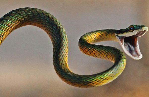 снятся змеи значение