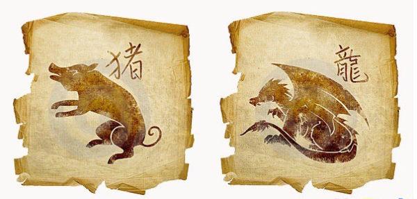 свинья и дракон