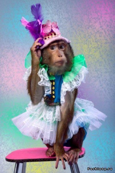 сон про обезьяну в одежде