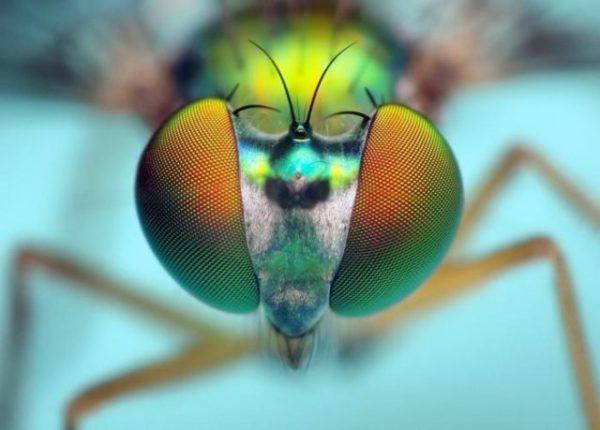 сон с участием мух