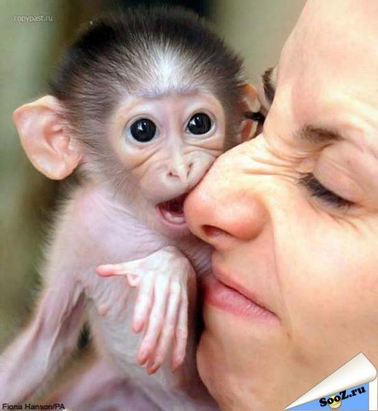 снится кусающая обезьяна