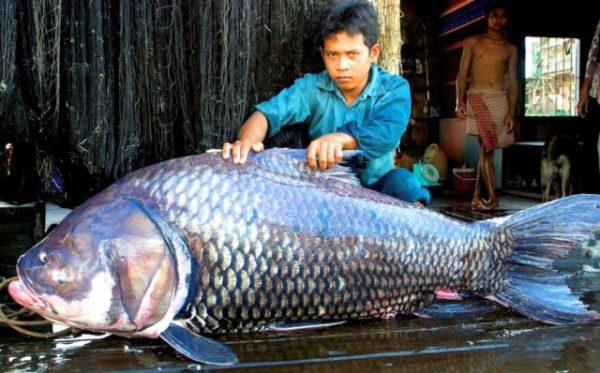 большая рыба
