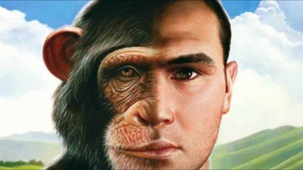 обезьяна часто сопоставляется с человеком