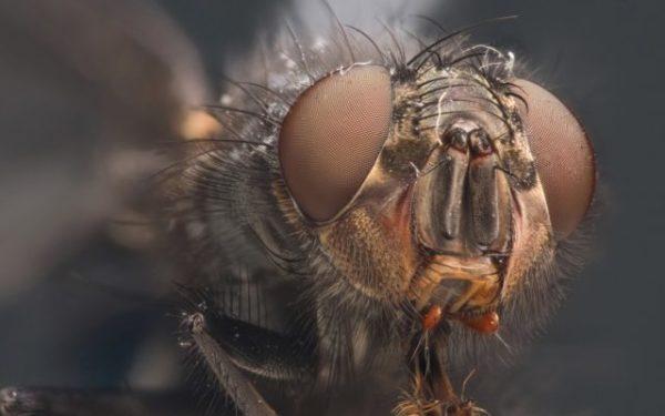 муха во сне может предрекать пожар