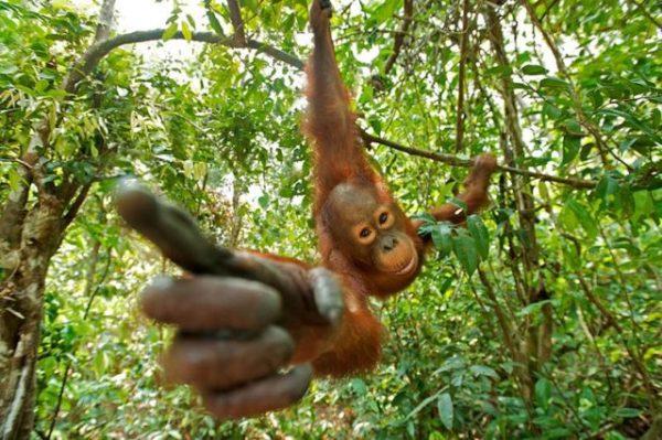 обезьяна на ветке