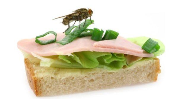приснилась муха на еде