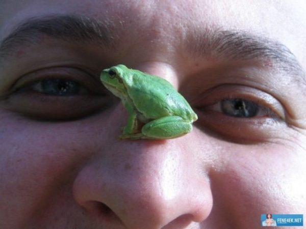 лягушка снится мужчине