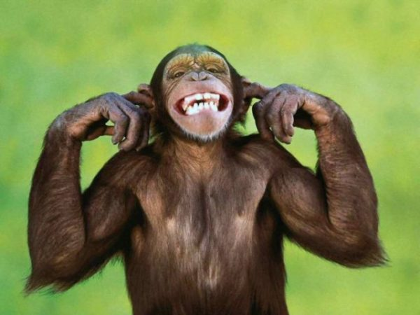 снится веселая обезьяна