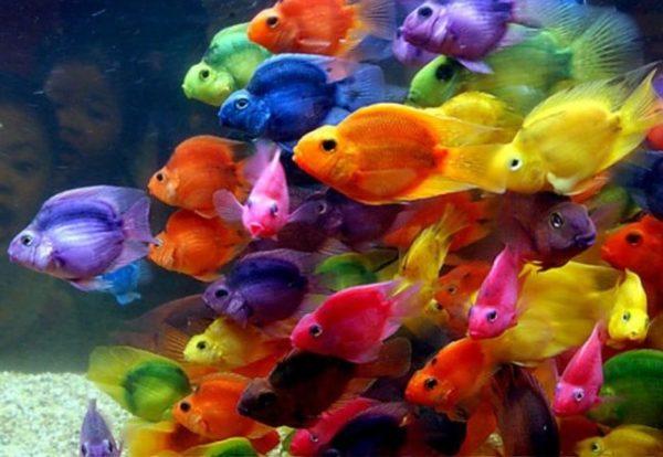 пестрые рыбки