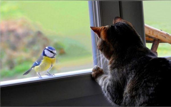 птица в окне