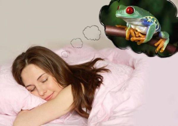 снится лягушка