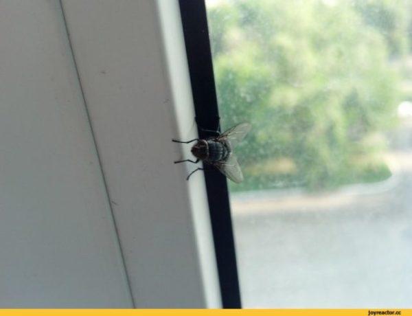 приснилась муха в доме