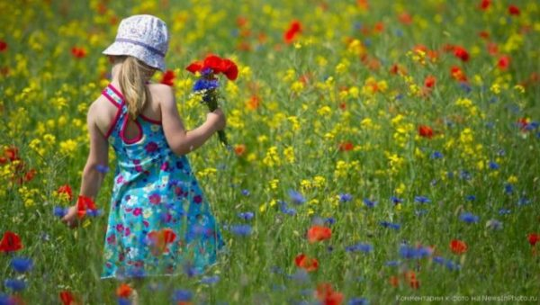 собирать цветы