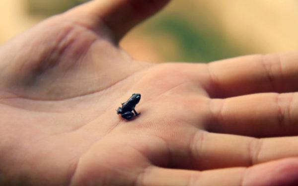 снится лягушка в руке