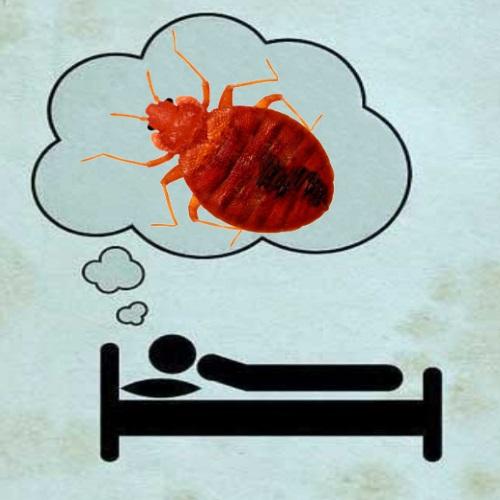 толкование сна про клопов